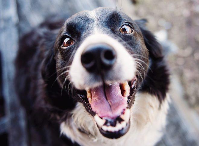 köpek bakımı nasıl yapılır