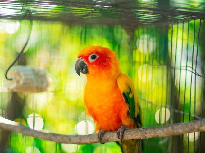 Kuşların Tırnak Bakımı Evde Yapılabilir mi