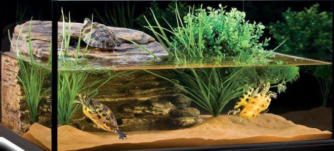 Su kaplumbağalarının yaşam alanı nasıl olmalı
