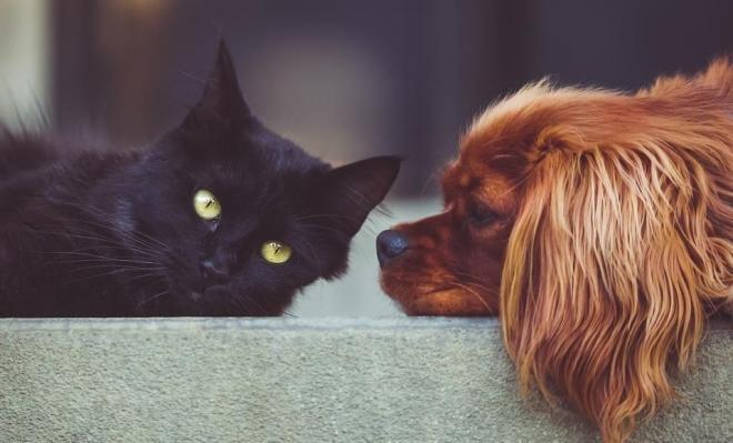 apartmanda kedi ve köpek bakma hukuku