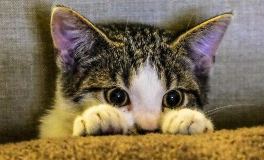 dişi kedi isimleri