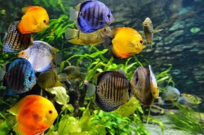 akvaryum balık bakımı