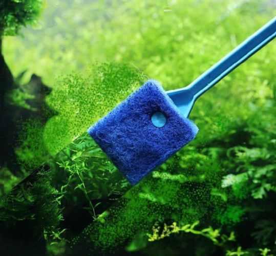 akvaryumda yosunlaşma ve kurtulma yolları