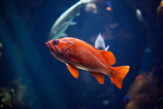 balıklarda stres nedenleri