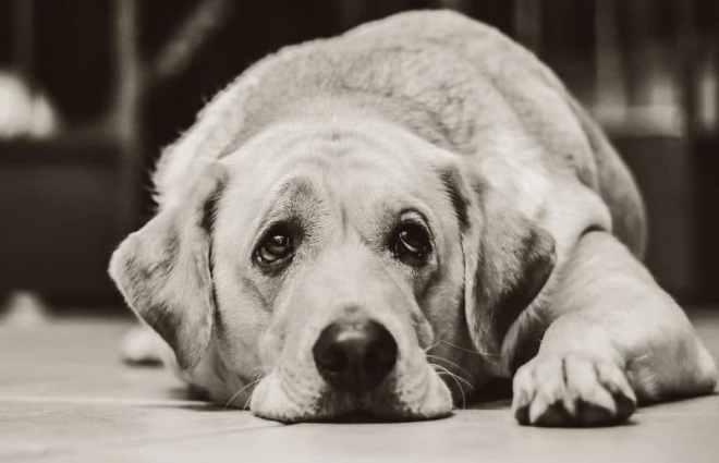 köpeklerin ağlaması