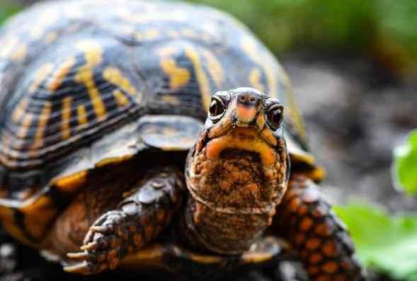 kaplumbağaların genel özellikleri