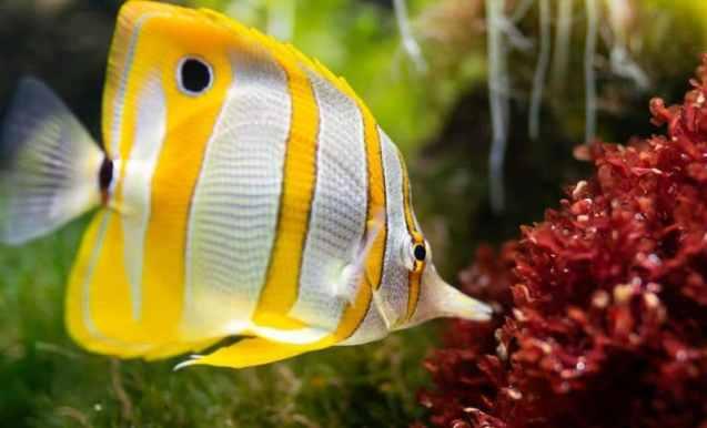 sağlılı balık bakımı için öneriler