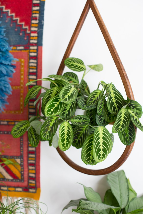 Hanging plant ideas | pepperomia indoor plant