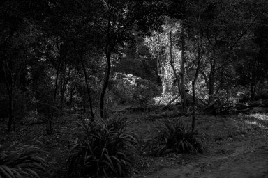 forest, bw, Cape Town, South Africa,