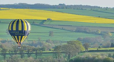yellow-fields