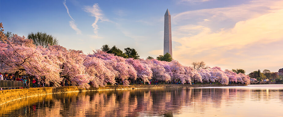 Kaligo's Spring Cities - Washington D.C.