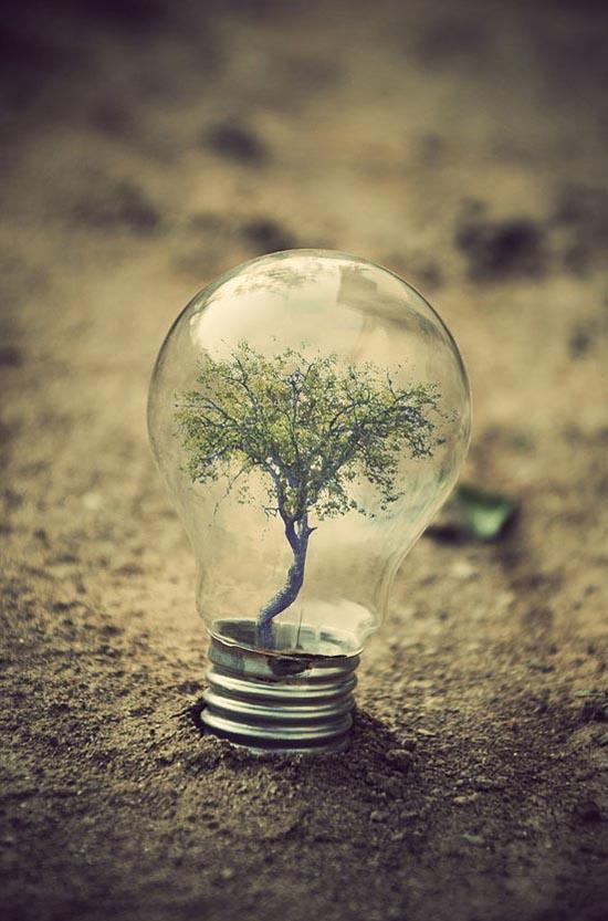Recycle Light Bulb