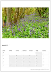 May - Bluebell Woods, Blairgowrie