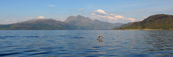 Dolphin and Beinn Sgritheall, Sound of Sleat