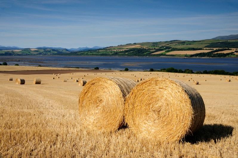 Harvest, Findon, Black Isle