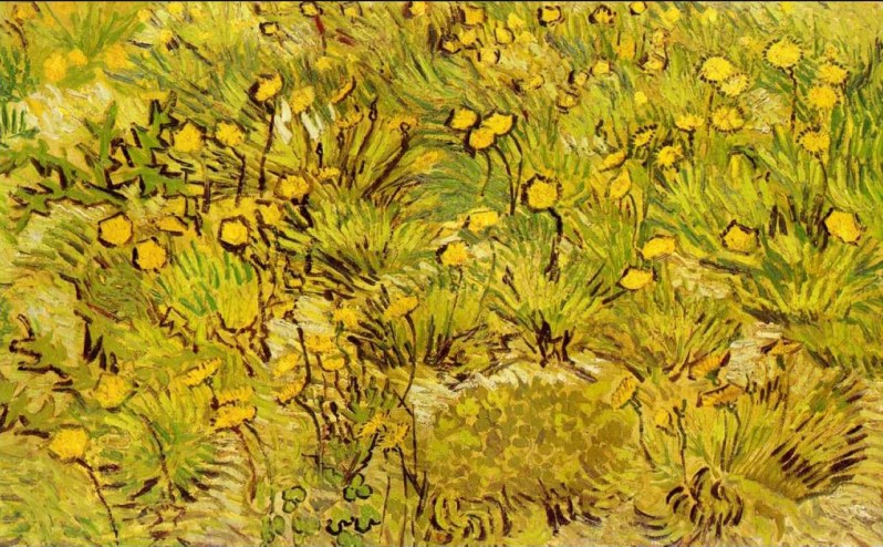 'A Field of Yellow Flowers' by Vincent Van Gogh