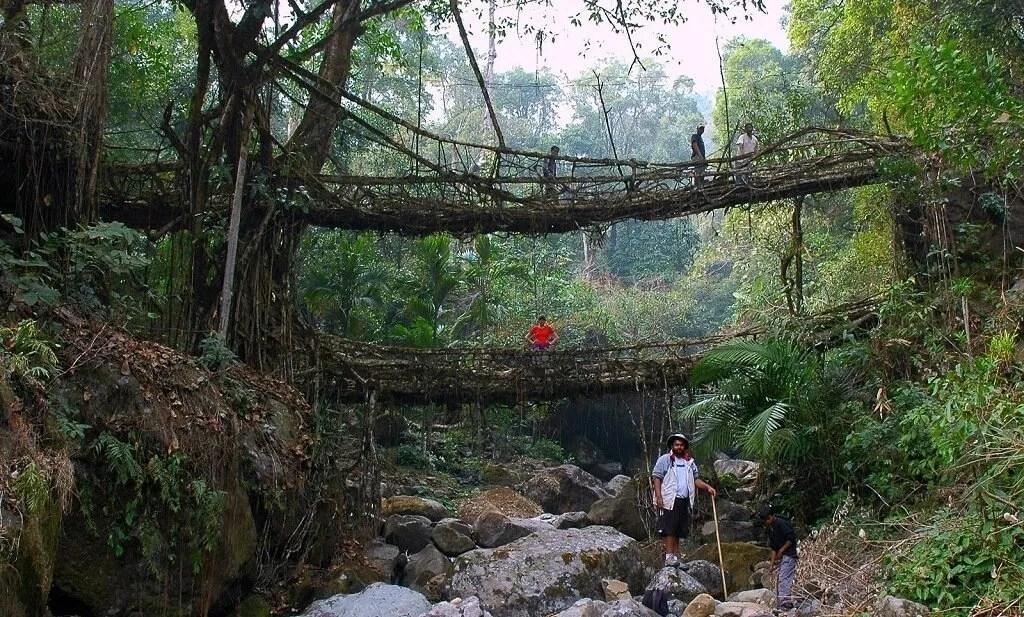 Living Root Bridge