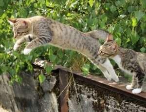 uciekające koty