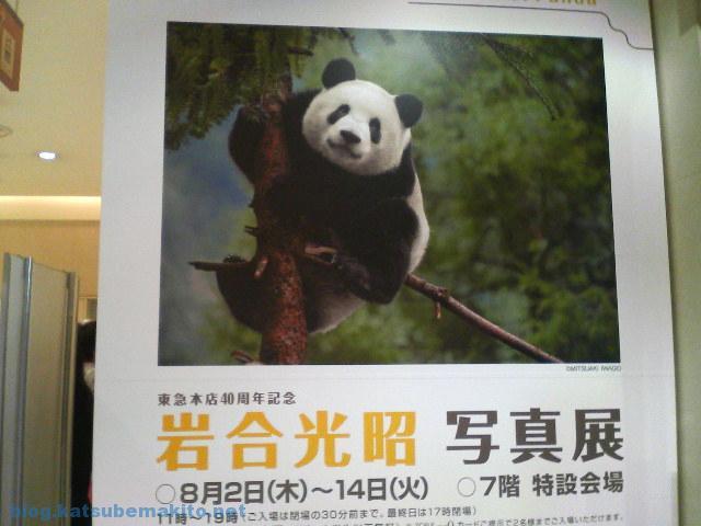 パンダの季節