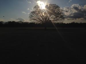 夕阳下的大树
