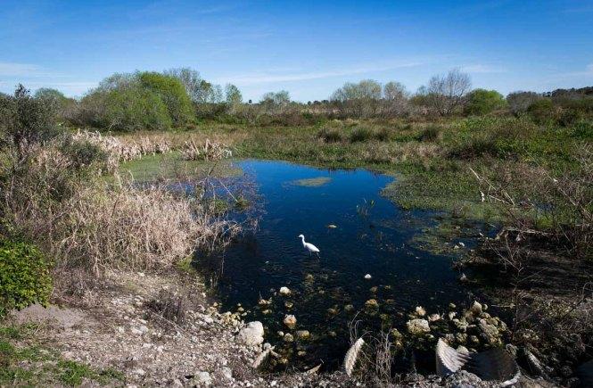 A lake at the Circle B Bar Reserve in Polk County