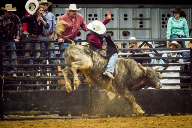 Bull riding at the Bar W Rodeo