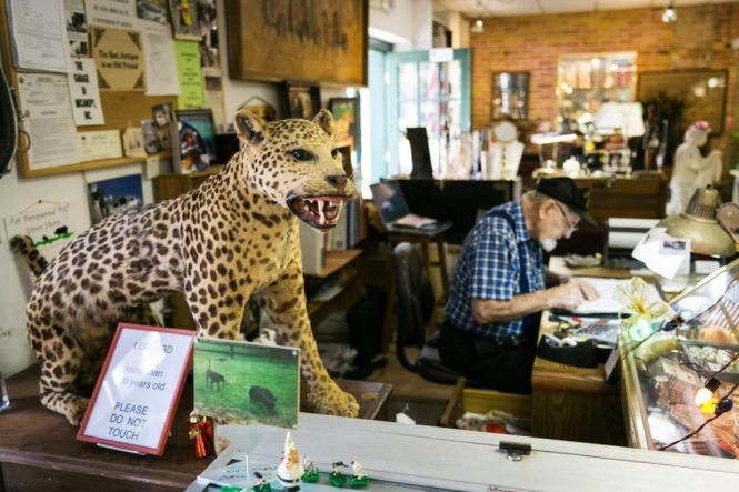 A stuffed leopard for sale in an antiques store