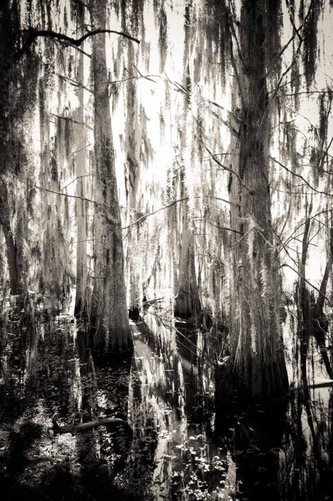 Trees in the swamp at Circle B Bar Reserve
