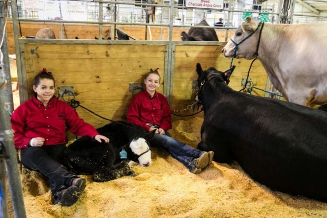 Cattle and their young caretakers at the Florida State Fair, photographed by NYC photojournalist, Kelly Williams