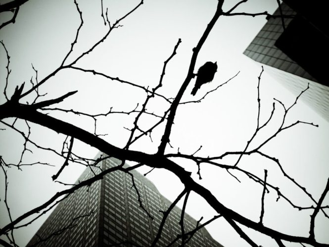 Skyscraper bird, by NYC photographer, Kelly Williams