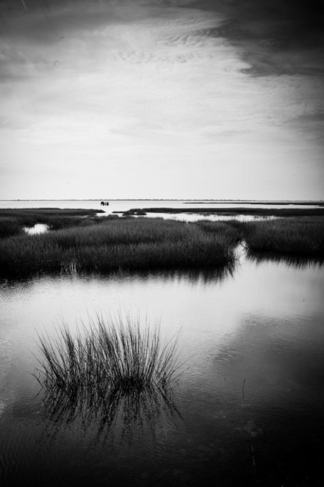 Chincoteague Island landscape, by NYC photographer, Kelly Williams