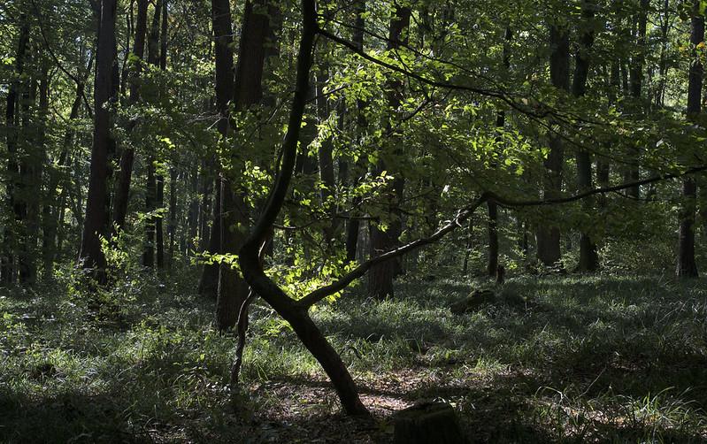 Green summer woods.