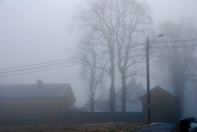 Foggy view of trees and buildings in the background.
