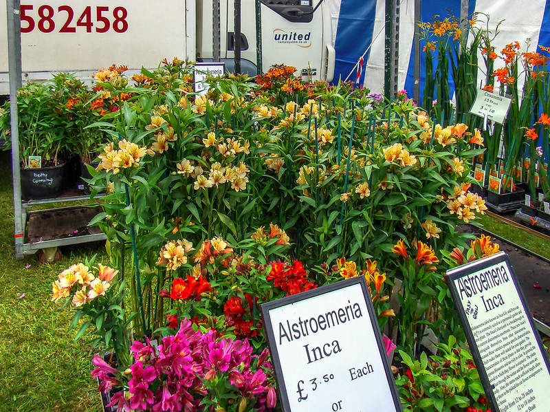 Picture of Alstroemeria Inca flowers for sale. Appears to be at a stall in the UK.