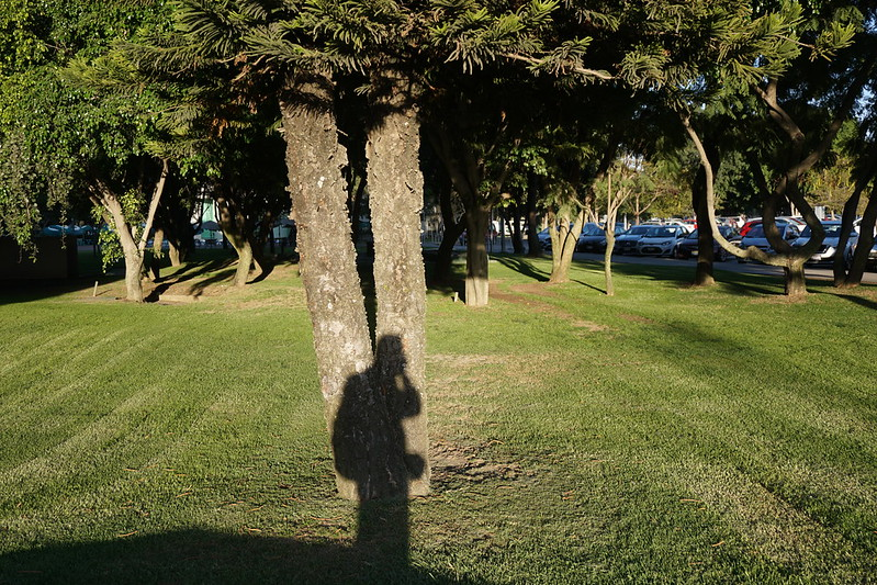 Pict ure of my shadow against a pair of trees, grass and a parking lot in the distance visible.