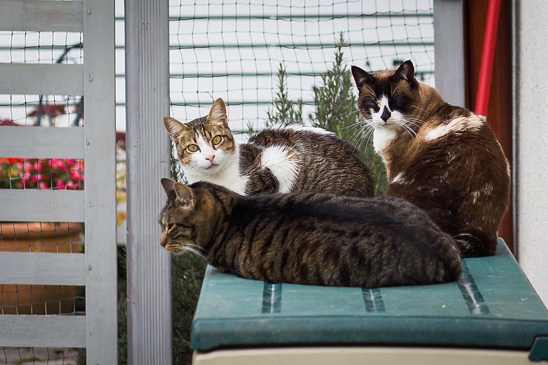 Three cats togehter on a cushioned bench in front of a fence to a garden.