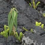... pour que les plantes se réacclimatent
