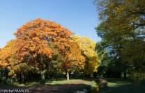 Dans l'arboretum