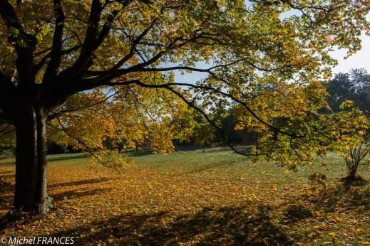 Bois de Vincennes - L'automne