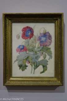 Musée de la vie romantique - expo Pierre-Joseph Redouté, le pouvoir des fleurs - Pierre-Joseph redoté - Papaver somniferum - 1839