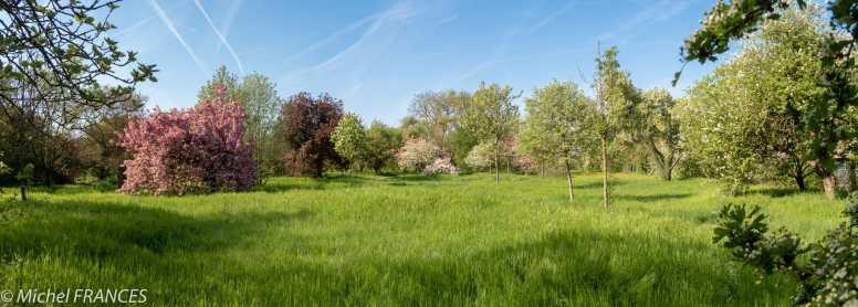 arboretum du Bois de Vincennes, école du Breuil, au printemps