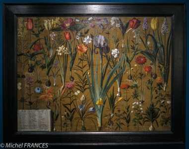 MAD - expo Drôles de petites bêtes d'Antoon Krings - Girolamo Pini - Étude de botanique - 17ème