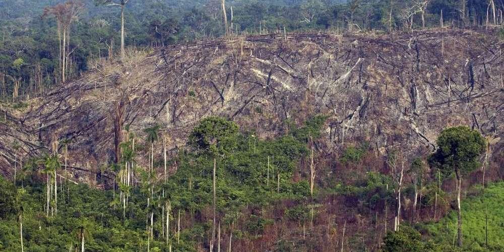 la-deforestation-accentue