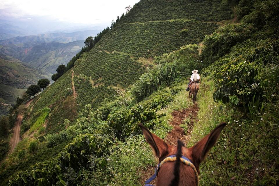 Antioquia, altitudine 1800m - 2100m