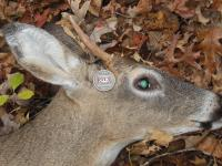 Mike Land First Kill Of The Season
