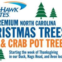 Where to Buy Christmas Trees on the Outer Banks