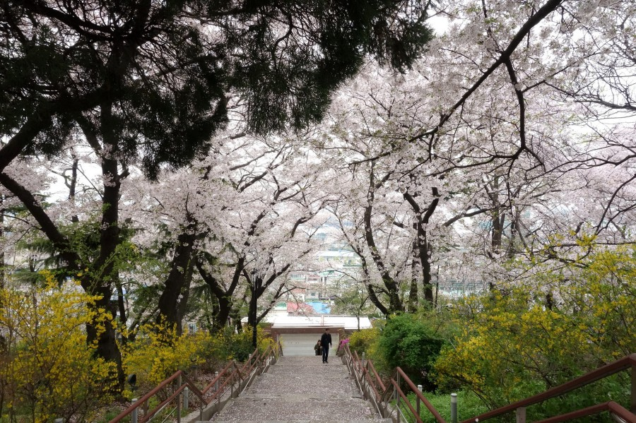 900 Korea Incheon Jayu Park 仁川自由公園 CVisualHunt  Free For Commercial Use FFC on VisualHunt CC BY 39449006861 1cde1148e6 k