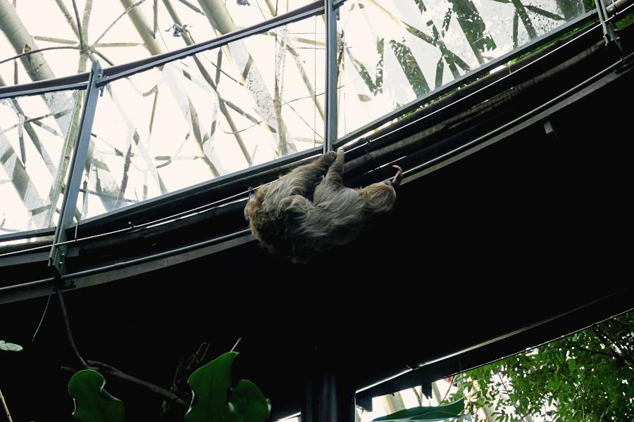 木柵動物園/台北動物園/熱帶雨林區/穿山甲館