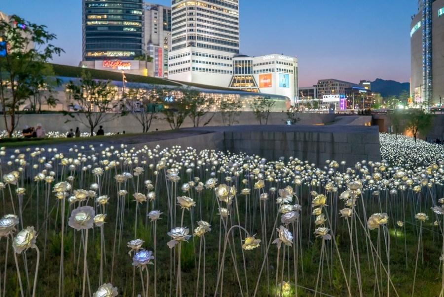 batch 東大門設計廣場玫瑰燈節 1