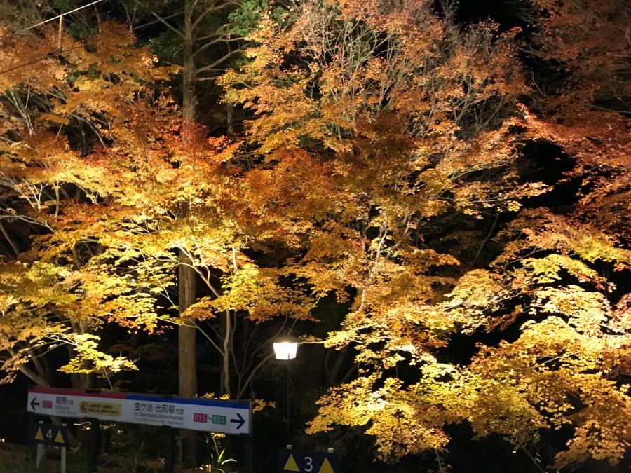 kyoto-night-maple